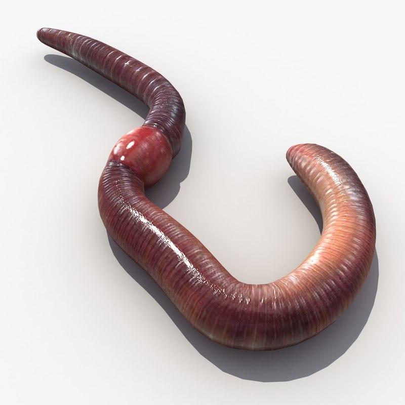 worm_1_c_0002.jpg