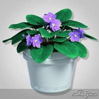 House plant Violet Flower