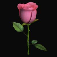 rose flower obj