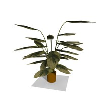Cartoon Indoor Plant 6
