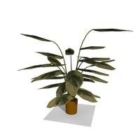 interior plant c4d