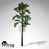 XfrogPlants Jaggery Palm