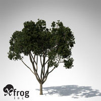 c4d weeping fig tree plant