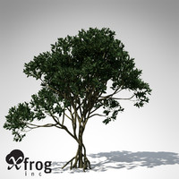 3d model asiatic mangrove asia tree