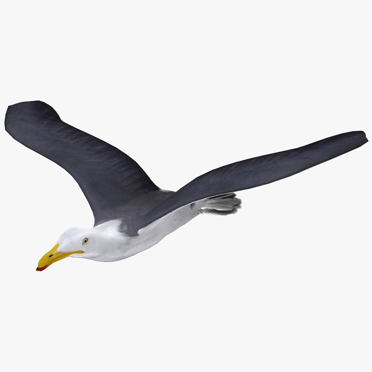 Gull_Flying_Animation_V2_000.jpg