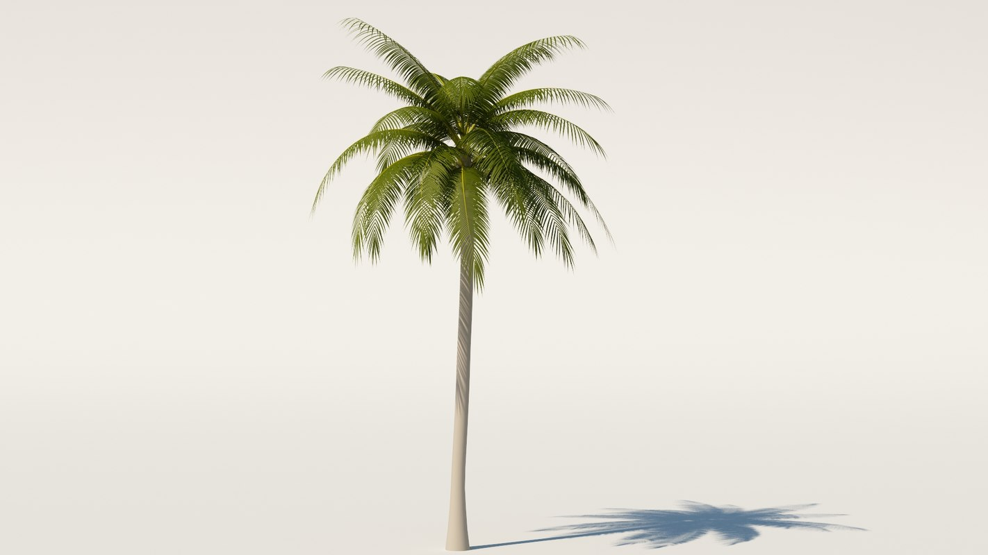 palm0000.jpg