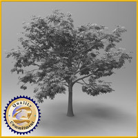 3d tree chestnut model