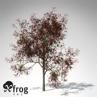 3d model of flame forest tree flowering