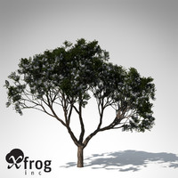 3ds max chinaberry tree