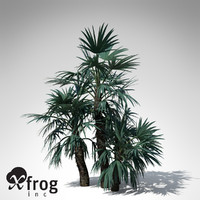 XfrogPlants Mazari Palm