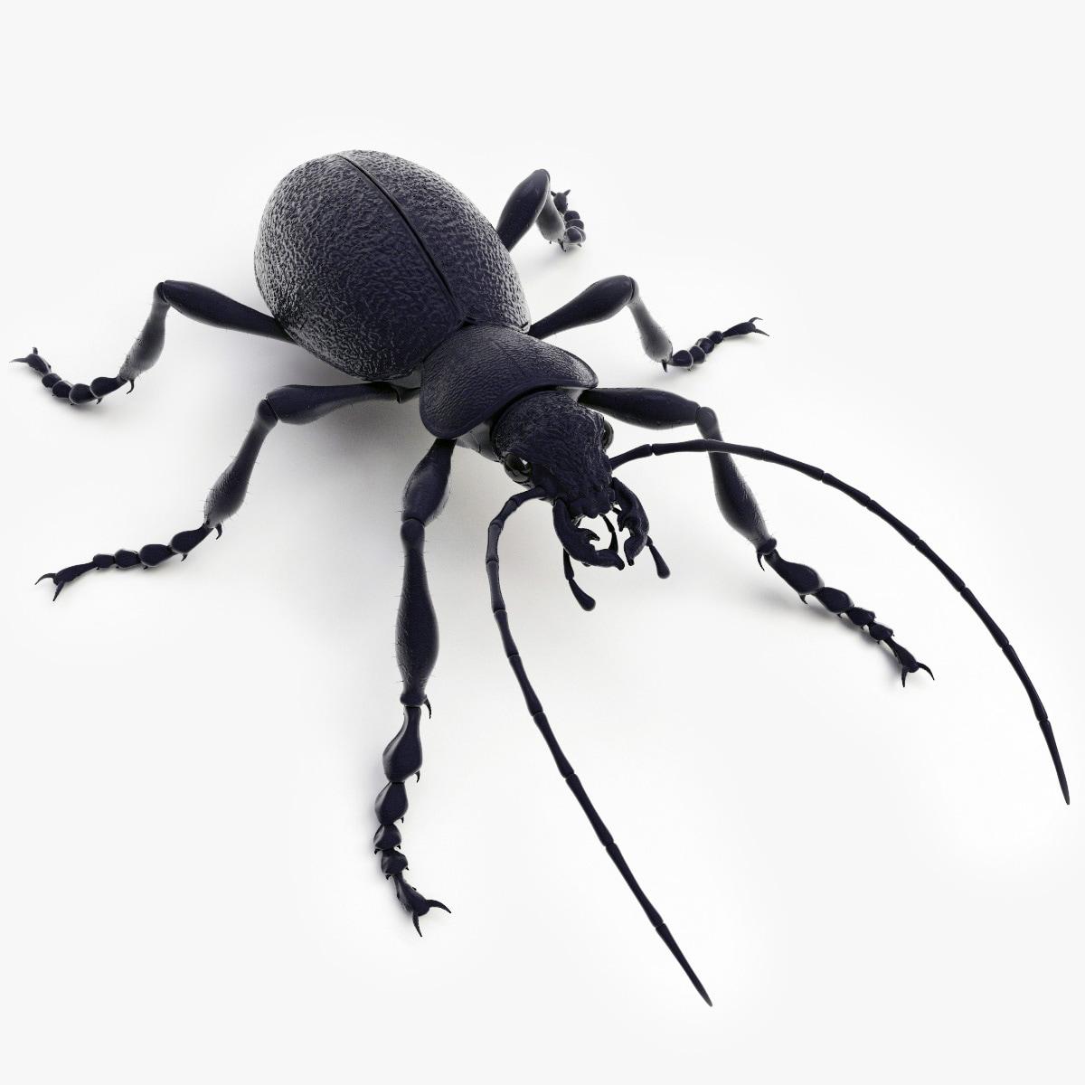 Ground_Beetle_00.jpg
