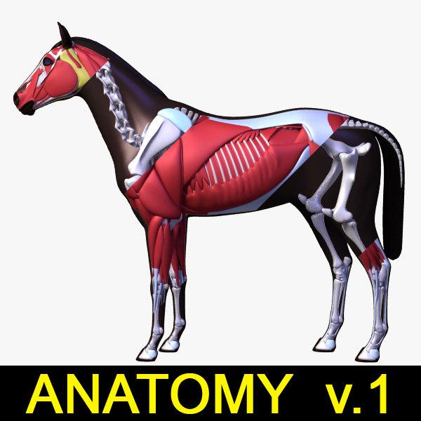 Horse_Anatomy_leo3dmodels_V1.jpg
