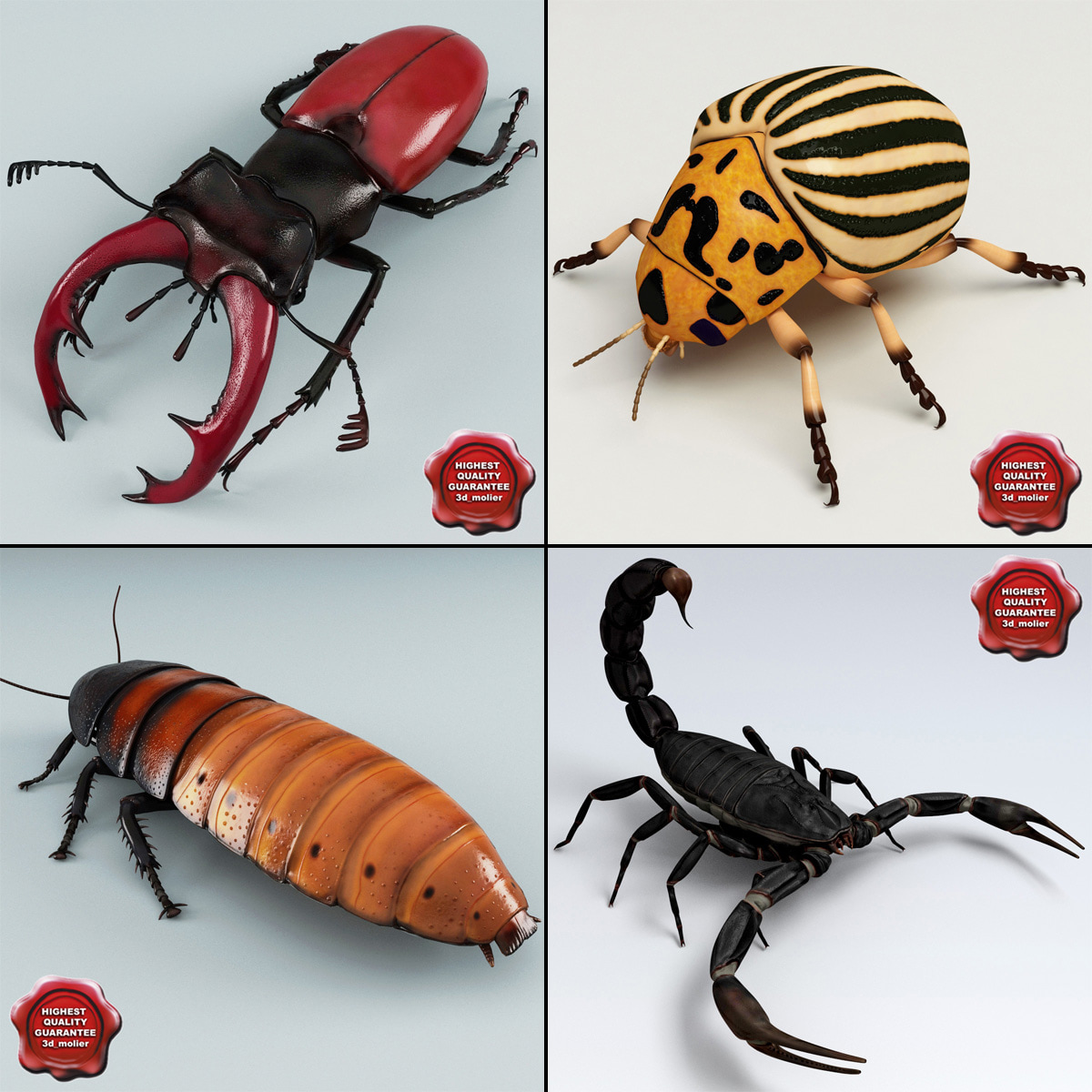 Insects_Collection_V3_00.jpg