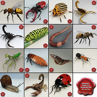 Insects Collection V6
