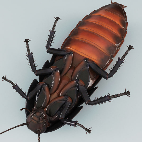 insects v6 3d model - Insects Collection V6... by 3d_molier