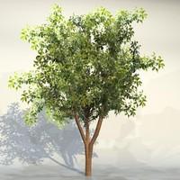Tree_069