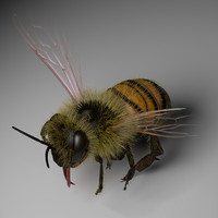 3d honey bee model