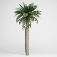 3d max chilean wine palm 05
