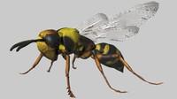 Wasp_FBX