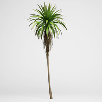 max mountain cabbage tree 14