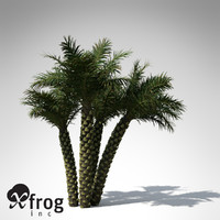 3ds silver date palm tree