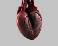 heart animation 3d max