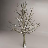 maya snow tree