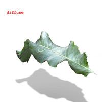 3ds max horseradish leaf