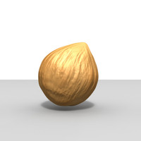 hazelnut nut 3d model