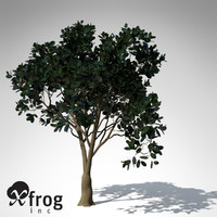 3d model rubber fig tree plant