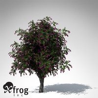 3d giant crape myrtle plant flowers model