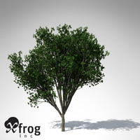 3d model persian ironwood tree