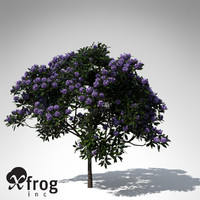 3d model common rhododendron flowers