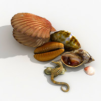 seashell shell sea 3d model