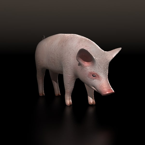 Pig pork (lightwave)