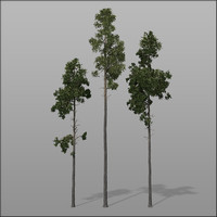 3d forest trees - pines model