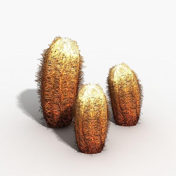 Plant Barrel Cactus