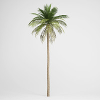 CGAxis Date Palm 03