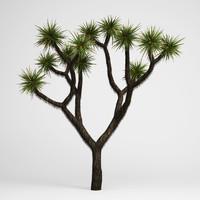 max joshua tree 15