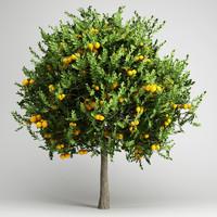 orange tree 20 3d model