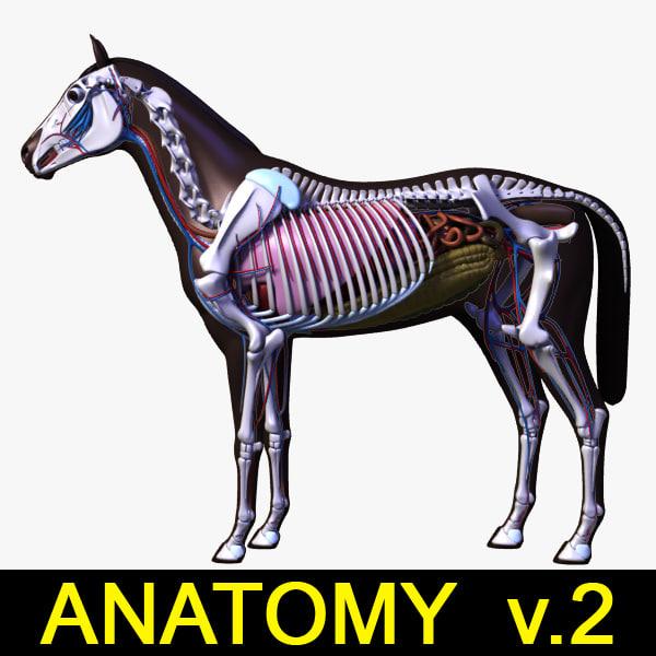 Horse_Anatomy_leo3dmodels_V2.jpg