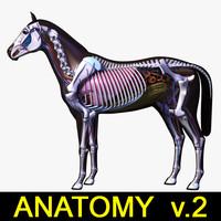 horse anatomy v 2 max