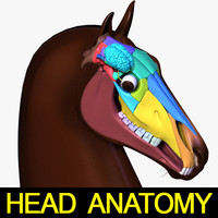3d model horse head anatomy skull