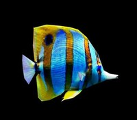 3d coralfish fish