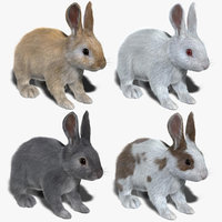 3d model rabbits fur