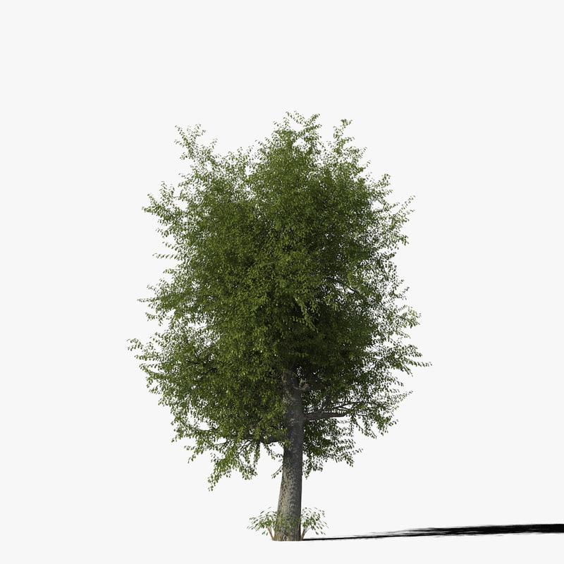 oak_typ03_render_f_0005.jpg