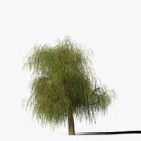 Willow Tree Type11