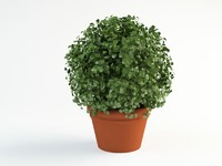 3d bush shrub