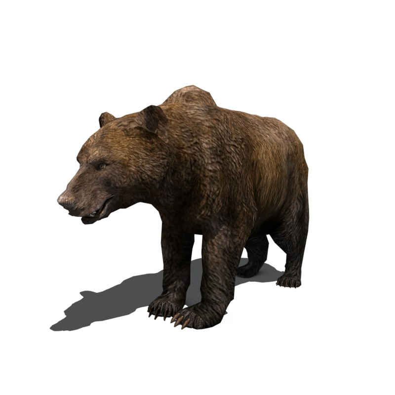 bear_three_quarter.png