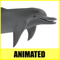 dolphin animation 3d c4d